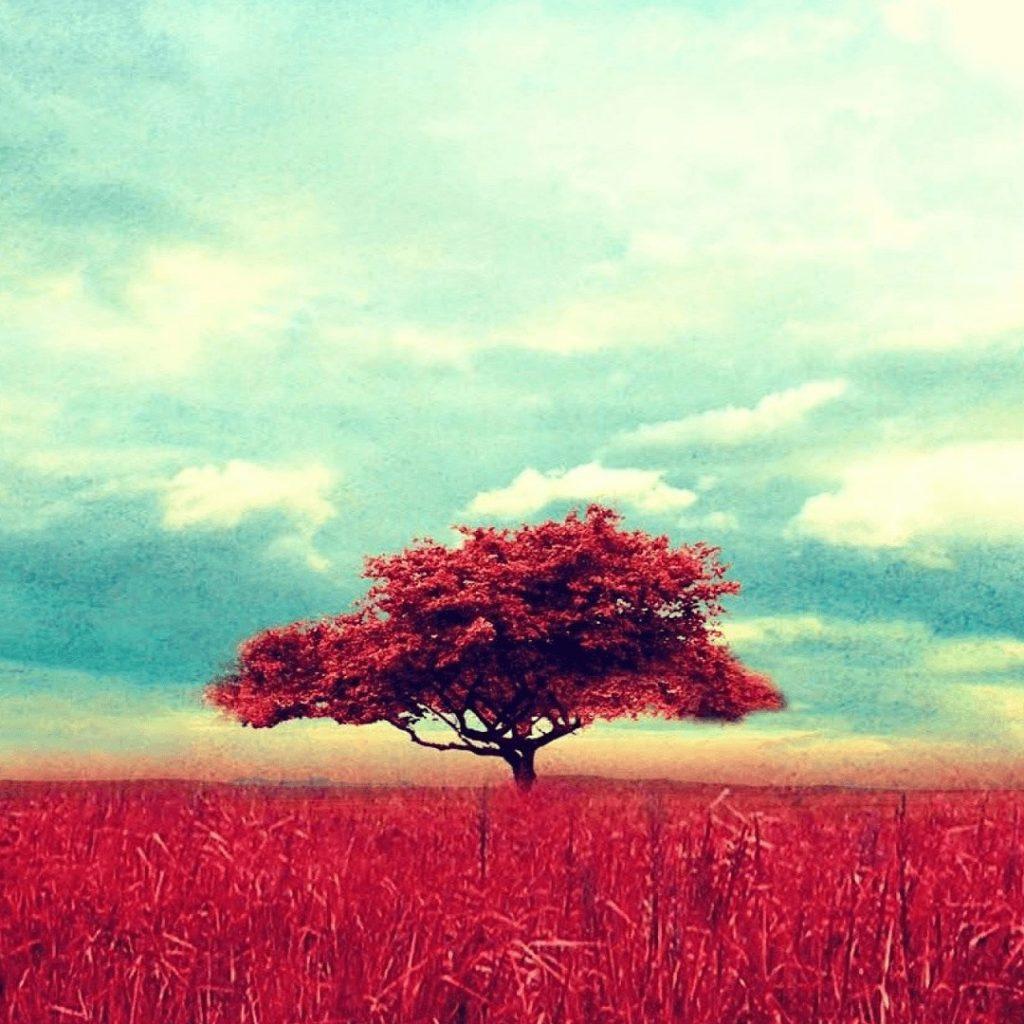 Baum 1080px